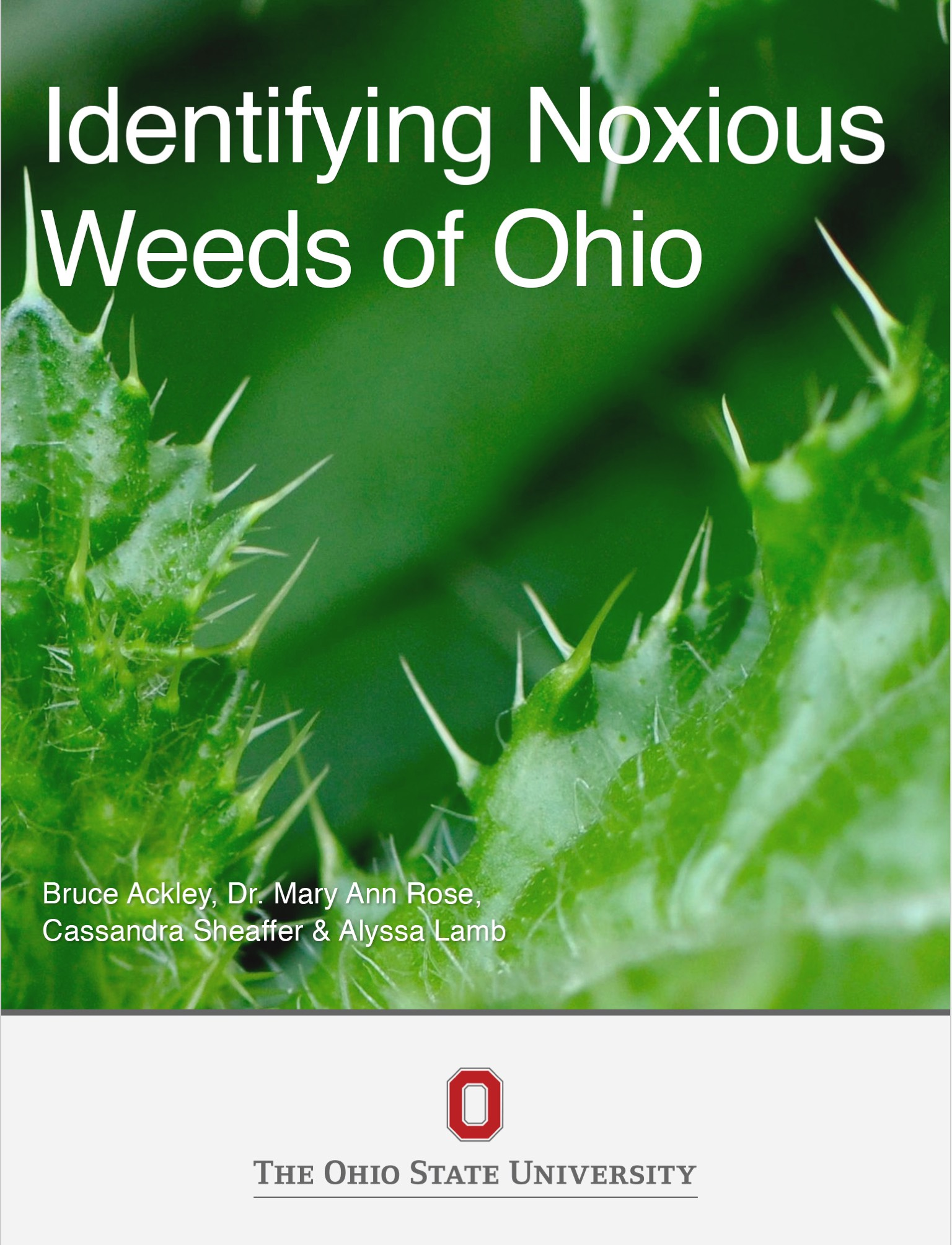 Cover image for Identifying Noxious Weeds of Ohio