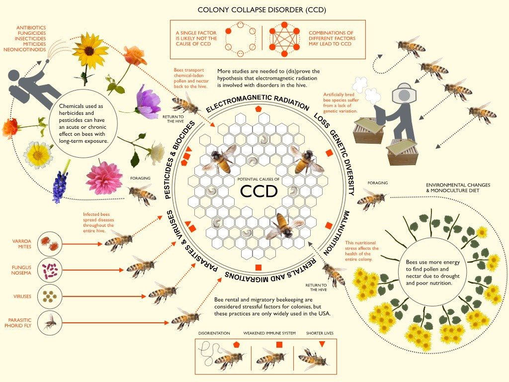 Colony Collapse Diagram