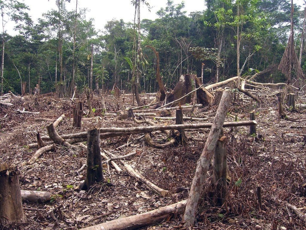 Clear cut section in rainforest
