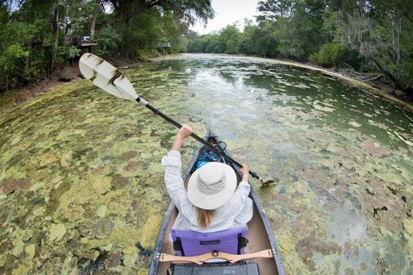 Kayak Proceeding Through Algae Filled River