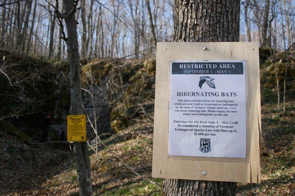 Bat Cave Sign Enforcing Fine for those Disturbing Hibernating Bats