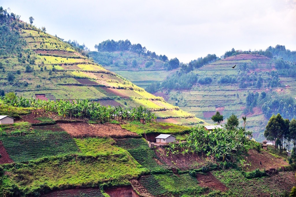 Deforested hills converted to agriculture in Uganda