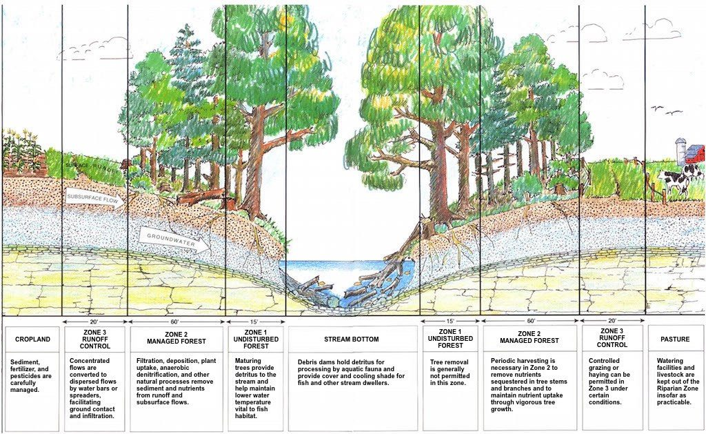 Zones within Riparian Areas Generating Both Positive and Negative Consequences