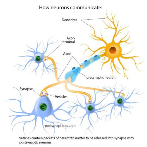graphic of how neurons communicate