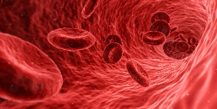illustration of blood cells moving through a vein