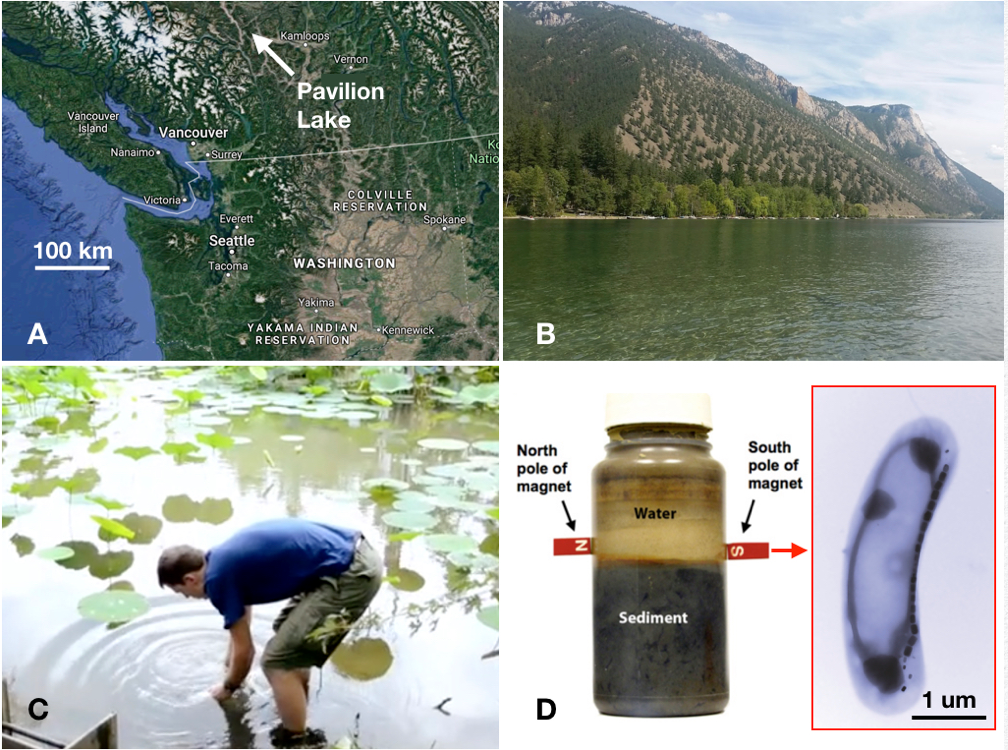 A figure with four panels. The first showing Pavilion Lake on a map, the second an image of the lake, the third a scientist taking a sample from the lake and the fourth a jar containing water and sediment also with an image of bacteria