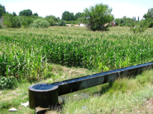 Image of irrigation canal next to crops.