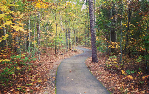 A winding path through a number of trees
