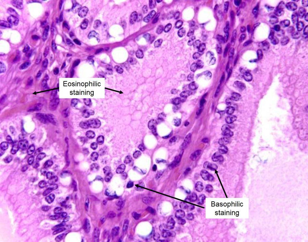 Appendix 2: Histological Staining Methods – Veterinary Histology