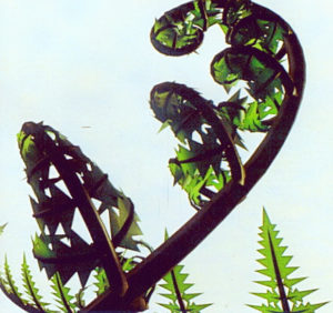 rendering of a plant