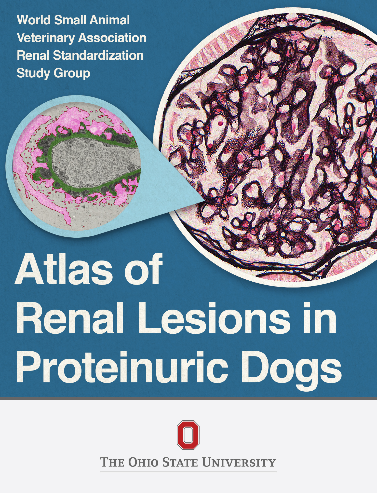 Cover image for Atlas of Renal Lesions in Proteinuric Dogs