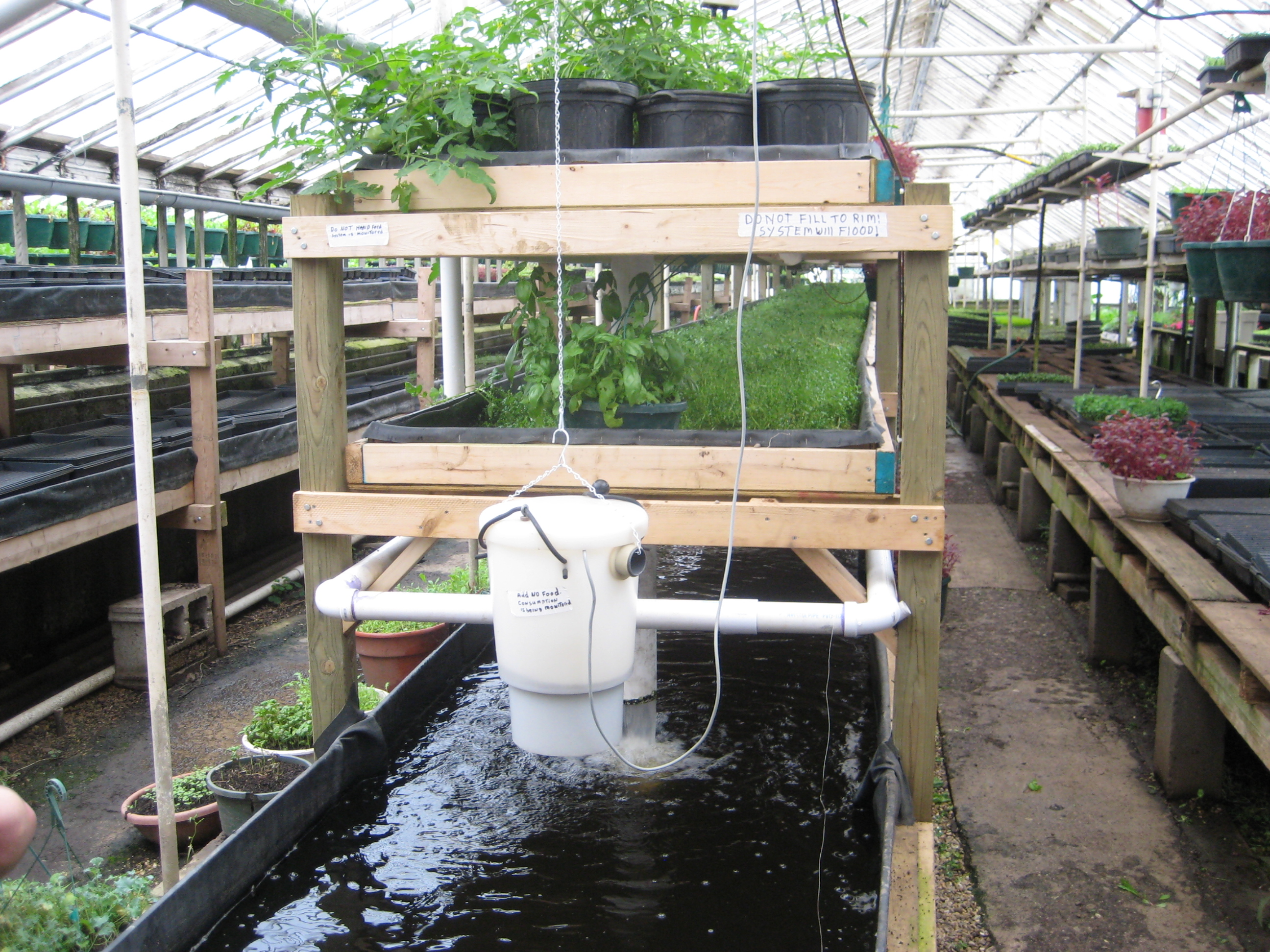 Aquaponics system with two shelves of potted plants over top a fish tank and filter hanging from chain above tank