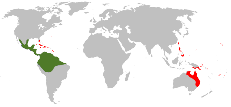 world map showing both native and introduced ranges of the cane toad in differing colors