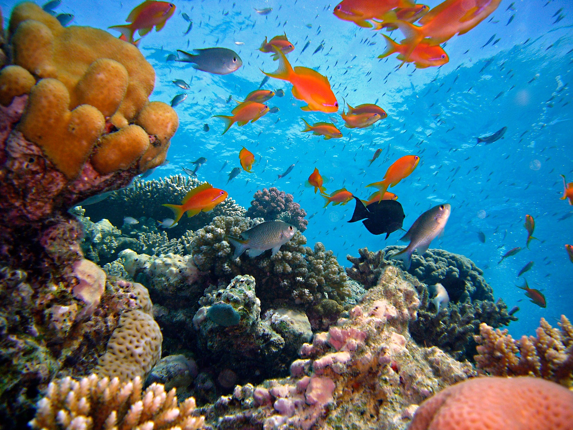 coral reef with coral species and several species of fish swimming above