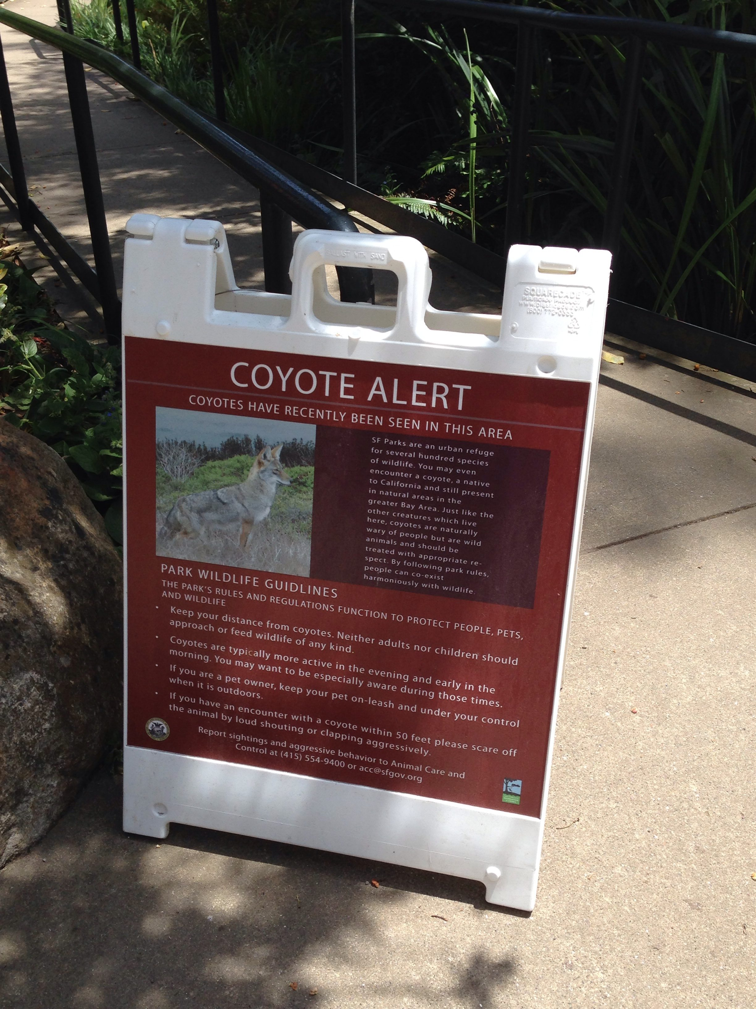 coyote alert sign on a sidewalk in the park