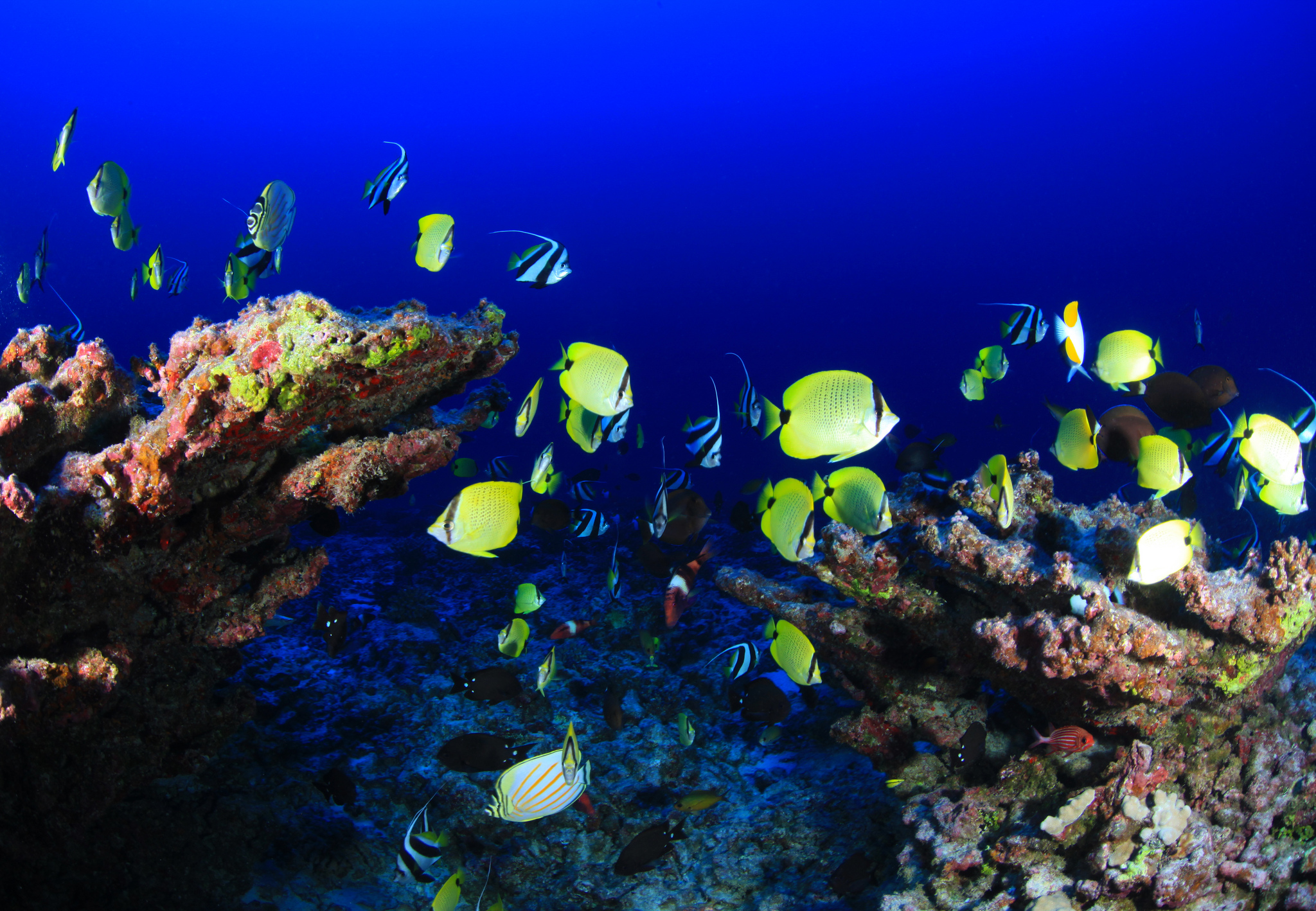tropical fish swimming around healthy coral reef