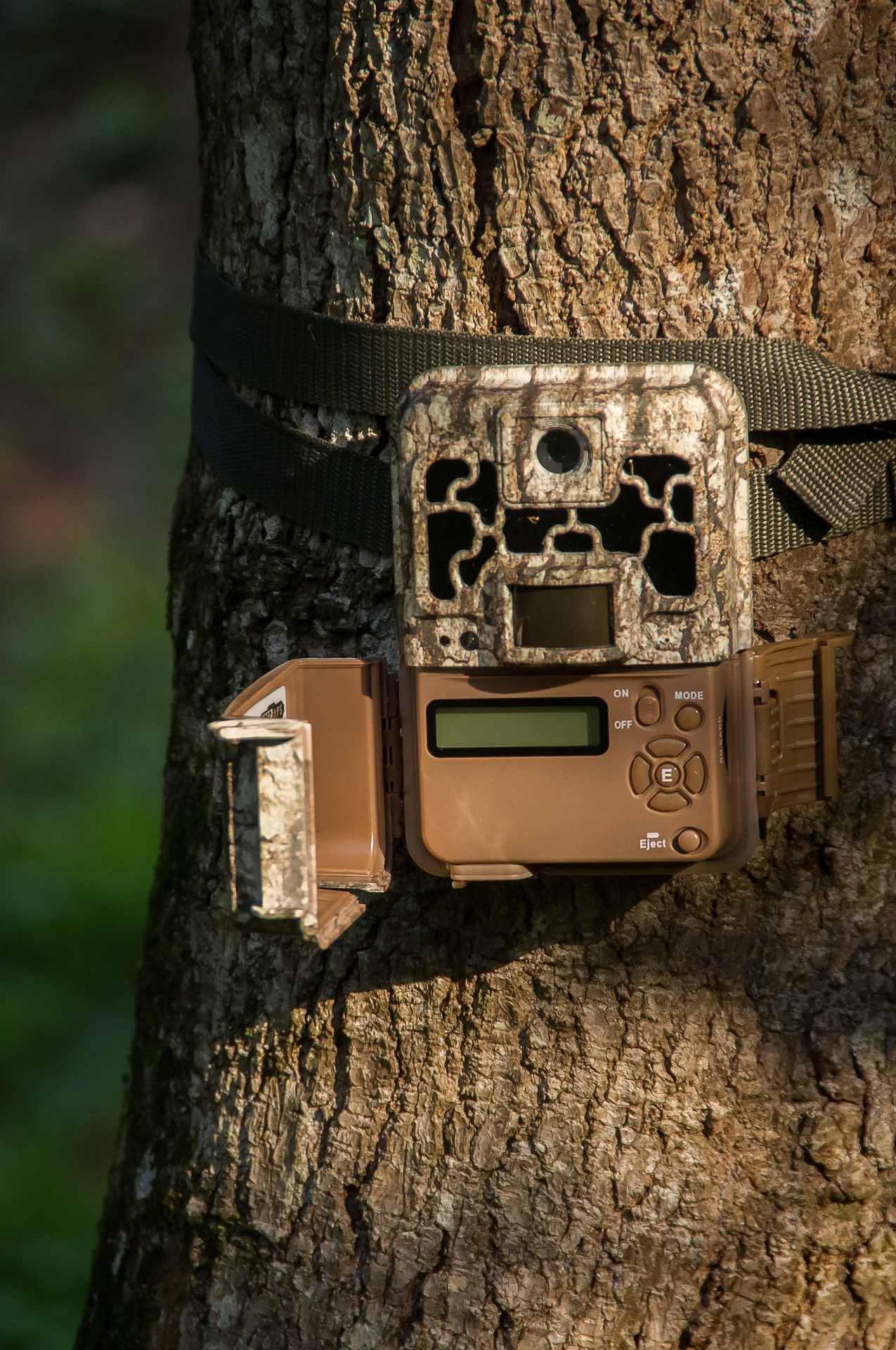 wildlife trail camera wrapped around a tree