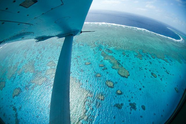 view from a small plane of the ocean and great barrier reef