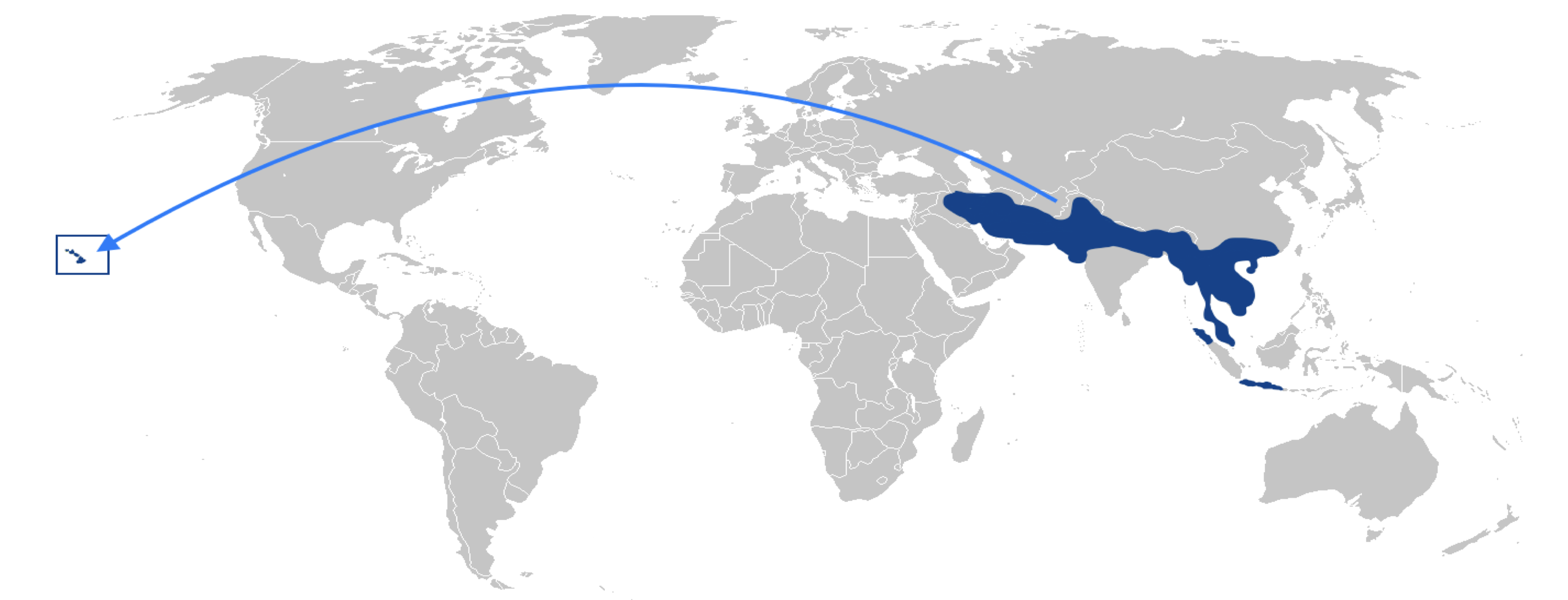 world map showing the native range of the mongoose with an arrow drawn to Hawaii where the mongoose has now occupied