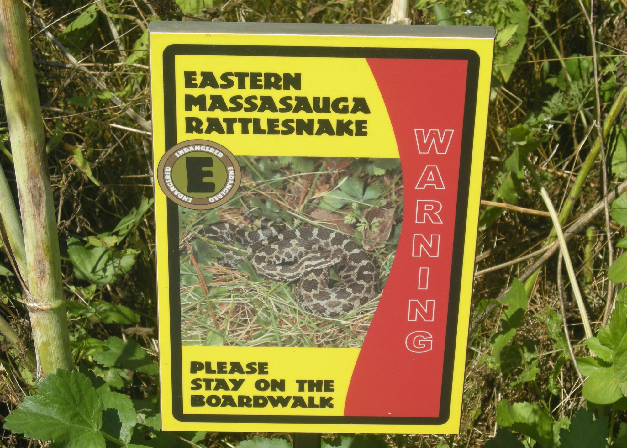 warning sign with an image of the massasauga and a warning to stay on the boardwalk